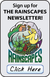 Click here to sign up for the RainScapes Gazette Newsletter