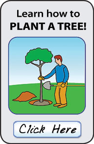 Click here to learn how to plant and care for trees.