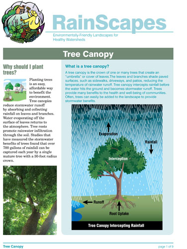 Image of the front of the RainScapes Tree Canopy Guide