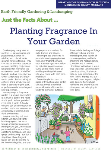 Planting Fragrance In Your Garden