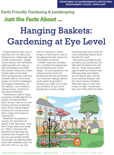 Hanging Baskets: Gardening at Eye Level