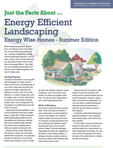Energy Efficient Summer Landscaping