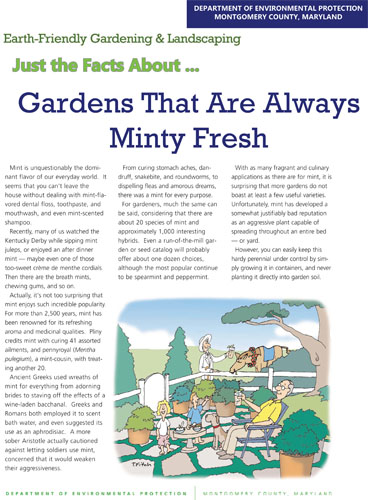 Gardens That Are Always Minty Fresh