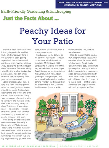 Peachy Ideas for Your Patio