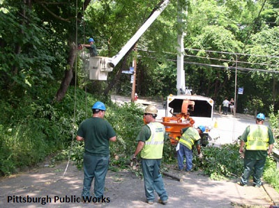 Image of Tree workers