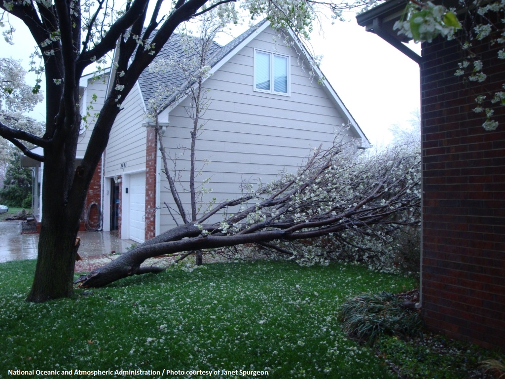 Image of fallen tree between properties