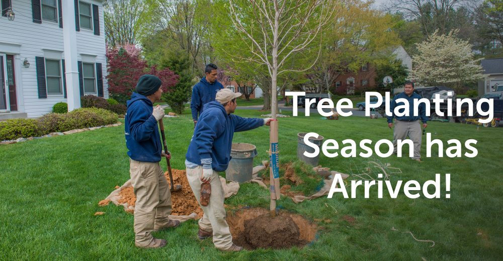 Tree planting season has arrived
