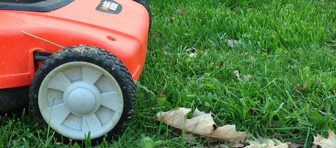 Make the switch to organic lawn care