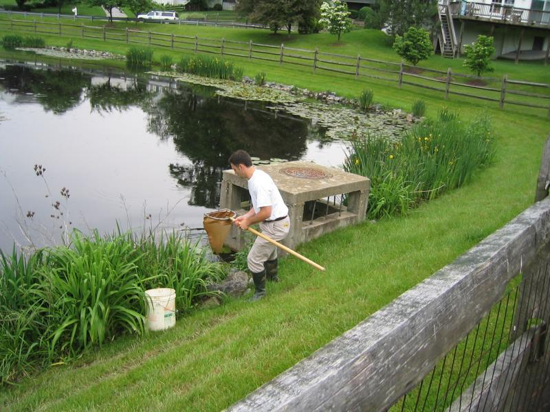 Image of DEP staff sampling a pond for mosquitoes.