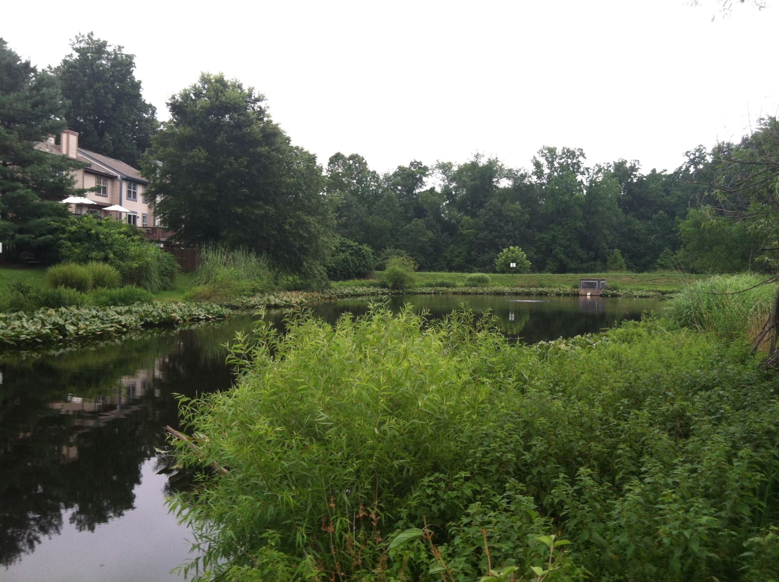 Image of Stormwater Pond