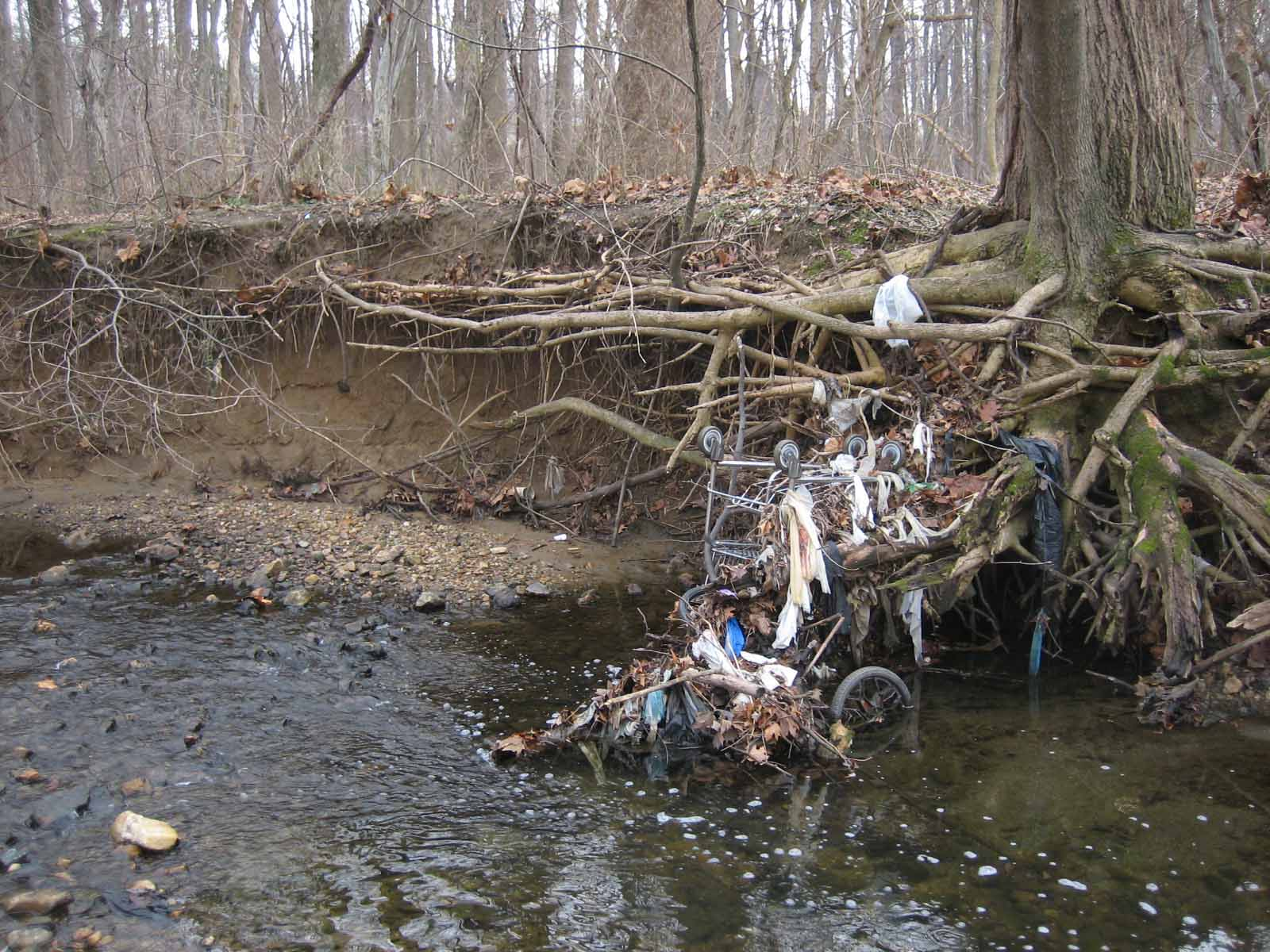 Image of trash collecting at a tree.