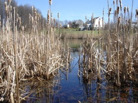 Image of Wetland behind houses