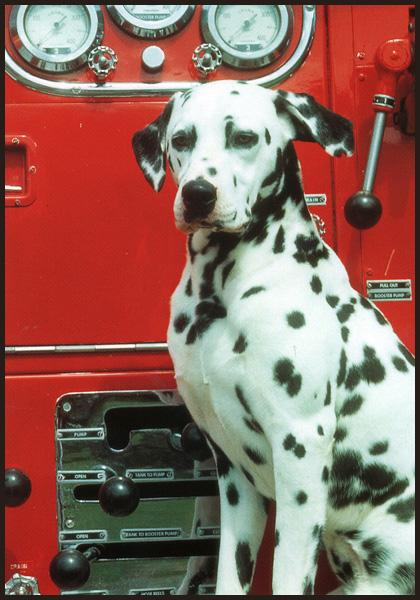 Picture of a dog by a firetruck