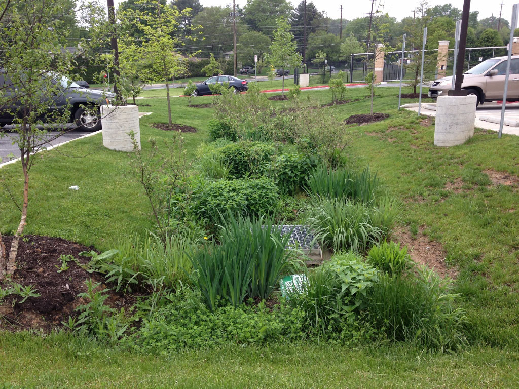 Rain gardens and stormwater ponds