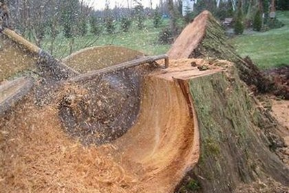 tree stump removal cumming