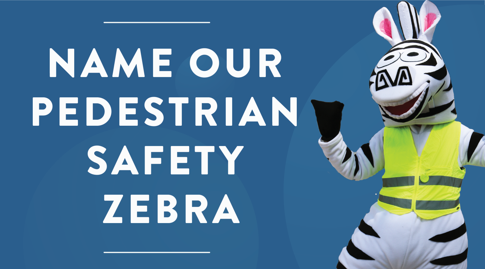 Name Our Safety Zebra