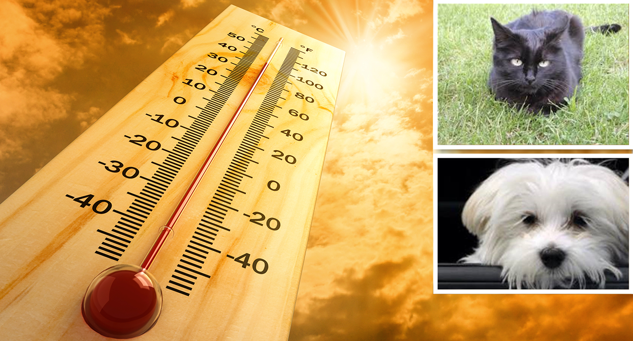 Pet Safety in Extreme Temperatures