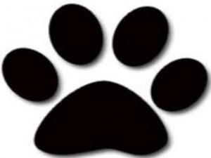 dog_paw_20110407064137_320_240