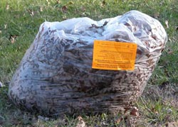 Use paper bags for leaves and other yard trim, not plastic.