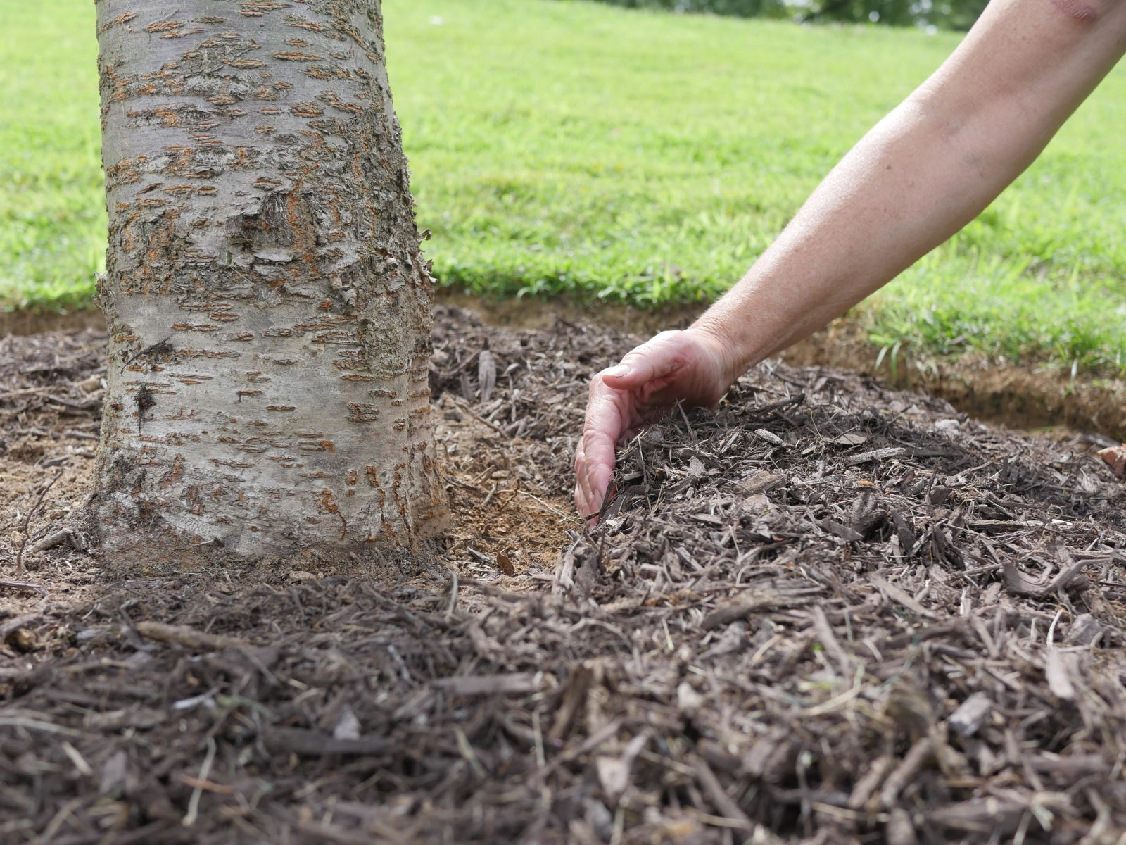 Push mulch away from the tree