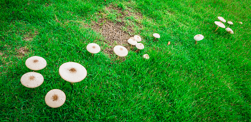 Mushrooms and fungi on grass. Photo byiphotothailand1 123RF Stock Photo