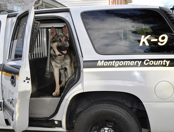 Field Services-K9