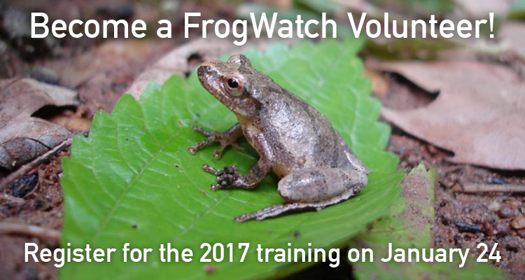 Become a FrogWatch Volunteer